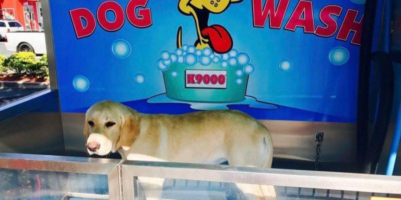 dog-wash